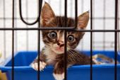 cute kitten in cage