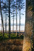 Trees Line Higher Ground Above Paciifc Ocean Beach Shoreline