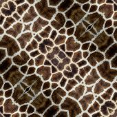 Beautiful Background Pattern Made From Giraffe Skin With Nice In Details