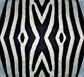 Black And White Patterns Made From Zebra Skin