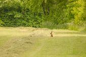 Cute Little Hare