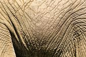 Close-up skin detail of African elephant