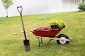 stock photo of manicured lawn  - Wheelbarrow with seedlings and a spade standing on a manicured green grassy lawn at the edge of a lake during spring planting and landscaping of the garden - JPG