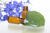 Two Bottles With Homeopathy Globules, Green Leaf And Flowers