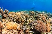 SCUBA Divers on a tropical coral reef