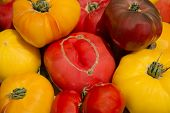 Farm Garden Fresh Healthy Nutritious Organic Heirloom Tomatoes