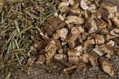 picture of chicory  - Dried natural wild chicory  - JPG