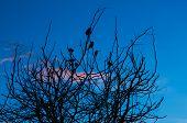 Dawn Bird Tree