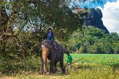 SIGIRIYA, SRI LANKA - 28 FEBRUARY, 2014: Japanese tourist riding on the back of elephant and mahout