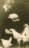 GERMANY, CIRCA 30s: Vintage portrait of woman feeding chickens