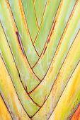 Palm  Pattern,
