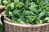 stock photo of popeye  - Wicker basket of fresh spinach from a farmer