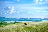 pic of caw  - beautiful spring nature in the Crimea - JPG