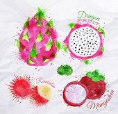 Exotic fruit watercolor dragon fruit, rambutan, mangosteen