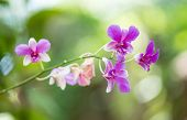 pic of orquidea  - Wild orchids and beautiful natural green background - JPG