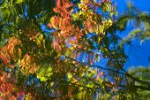 Autumn Foliage Reflections