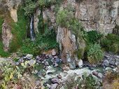Vegetation At Colca Canyon