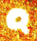 Flowers letter Q.