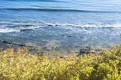 View of beach and reef in Santa Barbara, California from behind colorful foliage on a cliff.