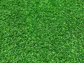 Green fresh high detailed grass