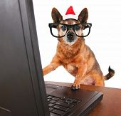 a dog surfing the internet on a white background with a santa hat on for christmas