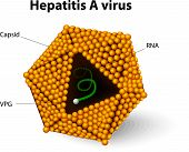 stock photo of microorganisms  - Hepatitis A virus - JPG