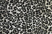 Grey and black leopard pattern.