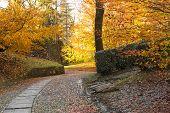 Autumn Season At The Park