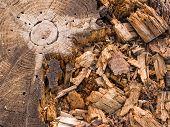 old stump