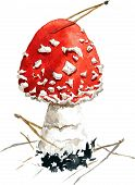 stock photo of fairy-mushroom  - amanita - JPG