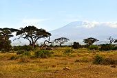 foto of kilimanjaro  - Snow on top of Mount Kilimanjaro in Amboseli