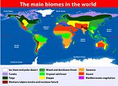 The main biomes in the world