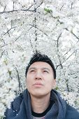 Vertical portrait of a handsome young Asian man looking up under the branches of a blossoming tree, in spring