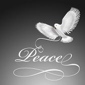 Dove bird of peace