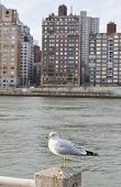 White Seagull In The City