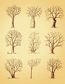 Hand Drawn Trees Isolated, Sketch, Vintage Style Trees Set