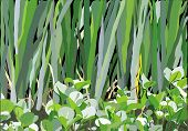 foto of marshlands  - an illustration of variety of leaves and flowers on the marshland - JPG