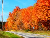 fall colors along a country road