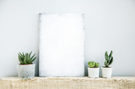 stock photo of paint pot  - scandinavian or american style room interior with painted frame and three succulents in diy concrete pot background for text - JPG