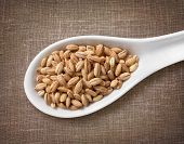 stock photo of spooning  - Pearl barley in white porcelain spoon  - JPG