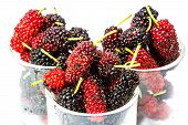 picture of mulberry  - fresh organic mulberry in glasses on white background - JPG
