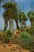 Very High Cactus Plants On The Knoll. There Is Another  Small Cactuses And Bushes Also On The Pictur