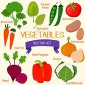 picture of beet  - Tasty vegetables in bright set - JPG