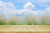 Постер, плакат: Outdoor Picnic Background With Picnic Table
