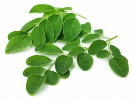 foto of malunggay  - Close up of Moringa leaves over white background - JPG