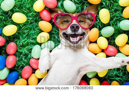 poster of Easter Bunny Dog With Eggs Selfie