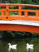 Kyoto Bridge Wit Ducks