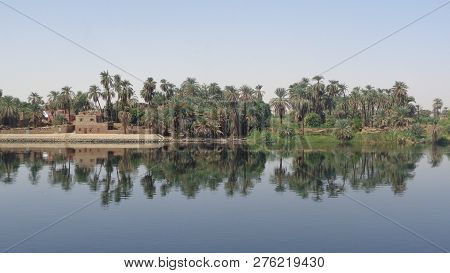 Palm Trees Reflecting The Water