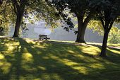 Park Bench On A Summer Morning