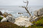 Large Boulders With A Twisty Tree Along The Rocky Coastline Of California Near Monterey And Big Sur, poster